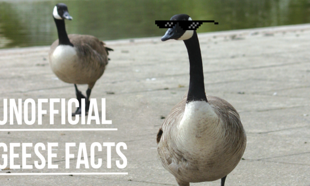 Unofficial Geese Facts